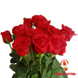 11 red Dutch roses bouquet